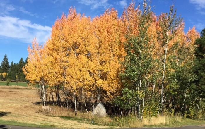 Seasonal Fall Recipes